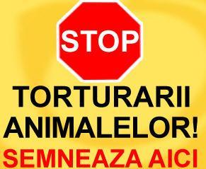 stop_tortura.jpg